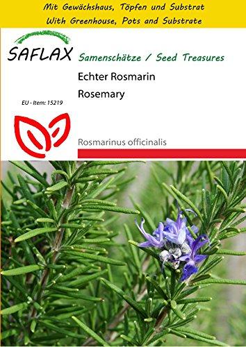 saflax-potting-set-rosemary-100-seeds-rosmarinus-officinalis