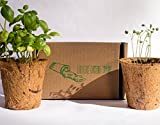 Summer Vegetable Mix Gardening Kit (3 Pack) by Earth Safe Gardening Company|Squash, Zucchini and Cucumber Veggie Seeds Mix with 3 Biodegradable Coconut Husk Pots and Plant Peat|Instructions Included