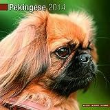 Pekingese 2014