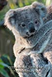 Cute Animal Journal #7: Young Koala Bear (blank pages)