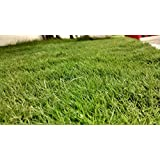 Selection Grass Seeds 5 KG + 1 KG Free For Your Garden By Syed