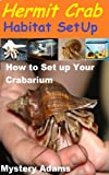 Hermit Crab Habitat : Hermit Crab care and Habitat Set-up