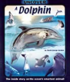 Uncover a Dolphin image
