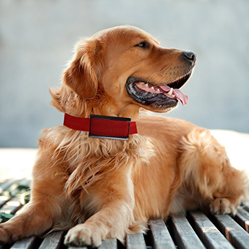 Best Shock No Bark Collar For Large Dogs