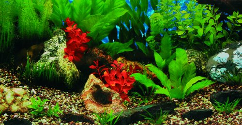 Decor fond d aquarium pas cher for Site aquarium pas cher