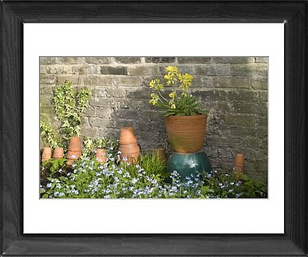 Framed Prints of Cowslip in Pot and Forget-Me-Nots and clay pots against garden wall from Ardea Wildlife Pets