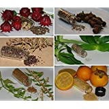 Medicinal Herb Garden Seed Collection #11 - A 6 Variety Pack of Rare Heirloom Herb Seeds! FROZEN SEED CAPSULES - The Very Best in Long-Term Seed Storage - Plant Seeds Now or Save Seeds for Years