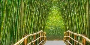 Bamboo Alley Canvas Wall Art, 5 Stars Gift Startonight Bridge 23.62 X 47.2 In