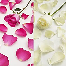 Farm Fresh Natural White - Hot Pink Rose Petals - 3000 petals
