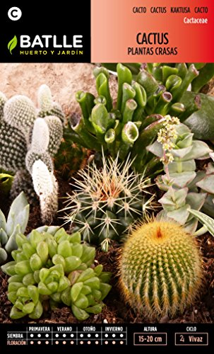 semillas-batlle-091201bols-cactus-plantas-crasas-variadas