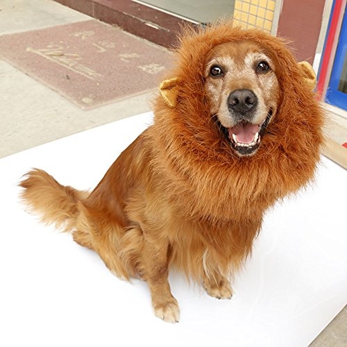 Dog C (Dog Costumes Lion King)