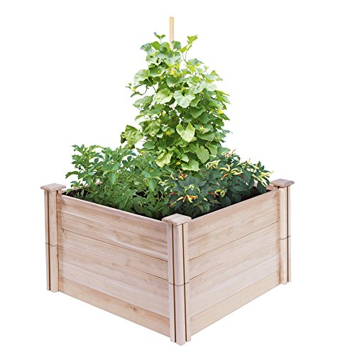 Amazon Greens Raised Beds