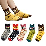 Ambielly Owl Adulte