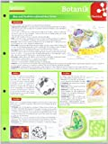 Lerntafel: Botanik im Überblick (Lerntafeln Biologie)