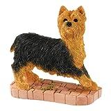 Bfa Studio Dogs Yorkshire Terrier Standing