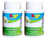KinwaNatura Orthosiphon 400 mg extract, 0.10% Sinensetin, 2X120 tablets