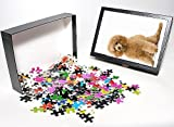 Photo Jigsaw Puzzle of Dog - Apricot Poo...
