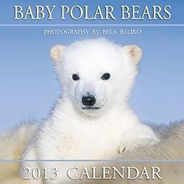 Baby Polar Bears 2013 Calendar