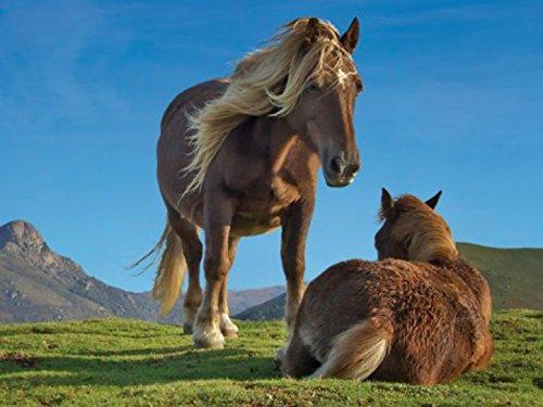 Chevaux-Papier-Peint-PhotoPoster-Autocollant-Ponies-Pottok-En-Libert-Au-Pays-Basque-2-Parties-240-x-180-cm