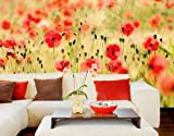 Smartdeco Deco Paper Dream of Poppies Wall Mural Set Format with Glue, 400 by 280cm