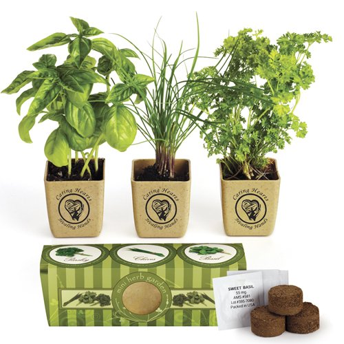 Organic Three Herb Garden Starter Kit - Sweet Basil, Chives and Parsley Plants (Indoor Plant Starter compare prices)