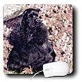 3dRose LLC 8 x 8 x 0.25 Inches Mouse Pad, Black Cocker Spaniel (mp_801_1)