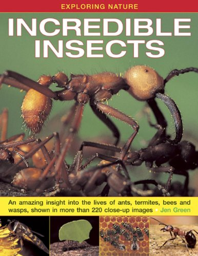 exploring-nature-incredible-insects-an-amazing-insight-into-the-lives-of-ants-termites-bees-and-wasp