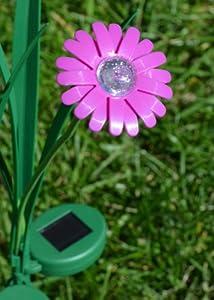 Amazon.com : Purple Daisy Flower Solar Light : Outdoor