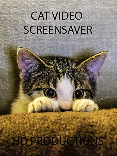 Cat Digital Screensaver With Music