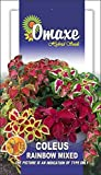 COLEUS RAINBOW MIXED SUMMER FLOWER SEEDS-AVG 40/50 SEEDS BY OMAXE