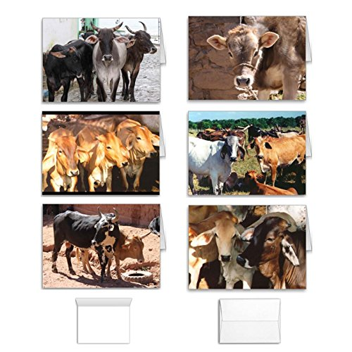 Cow Note Cards Set: Greeting Value Pack of 12 Assorted Blank Inside South America Farm and Ranch Designs, Made in USA (Butcher Farm Animals compare prices)