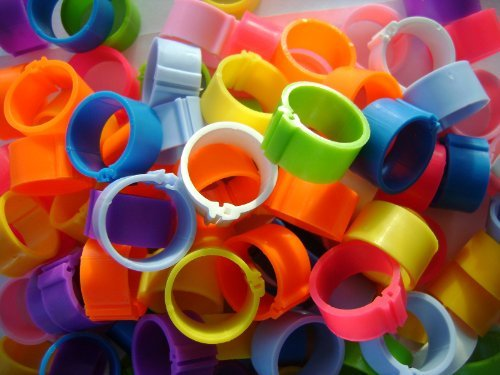 100-Poultry-Leg-Rings-8mm-Clip-to-fit-chicks-pigeons-tiny-bantams-MIXED