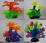 Produktbild von 4 x Koralle Smiling Coral 2