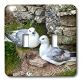 Danita Delimont - Birds - Northern Fulmar, Noup Head on Westray, Orkney, Scotland. - Light Switch Covers - double toggle switch (lsp_209875_2)