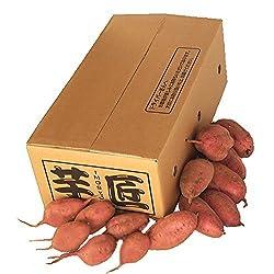 種子島産 一粒安納芋 詰め放題 3.5kg [TUS-ME]