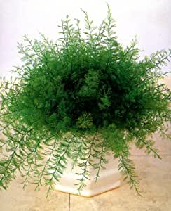 Plante de Neptune - Lot de 4