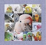 2013年版 365days 鳥どりカレンダー