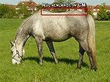 Time4Horses Klassische Thermodecke Pferdedecke Winterdecke Outdoordecke 300gr. 1200Denir -