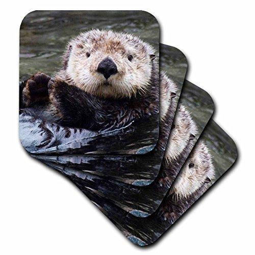 3dRose cst_45622_1 Sea Otter 'Closeup Enhydra Lutris' Soft Coasters, Set of 4