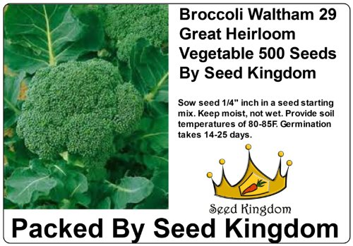 Broccoli Waltham 29 Great Heirloom Vegetable 500 Seeds By Seed Kingdom