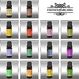 Top-14-LUXUS-100-Pure-Aromatherapie-therische-le-Top-14-Set-10-ml-zur-therapeutischen-Anwendung-KOSTENLOSES-Rezept-Heft