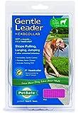 Petsafe - Premier Pet Gentle Leader Dog Headcollar / Head Collar (Pink, Medium)