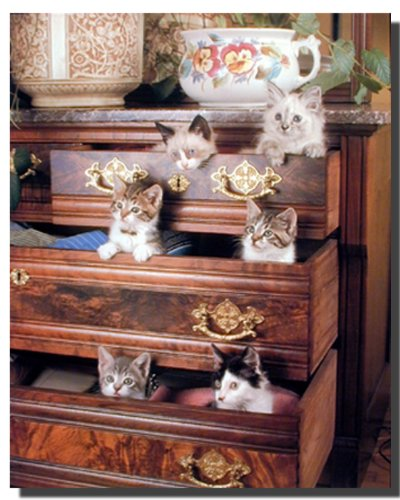 Funny Cat Kittens In Drawers Cute Animal Wall Art Print Poster (16X20)