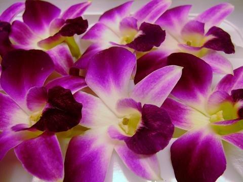 フレッシュ エディブルフラワー(食用花) デンファレ 1パック8個入り