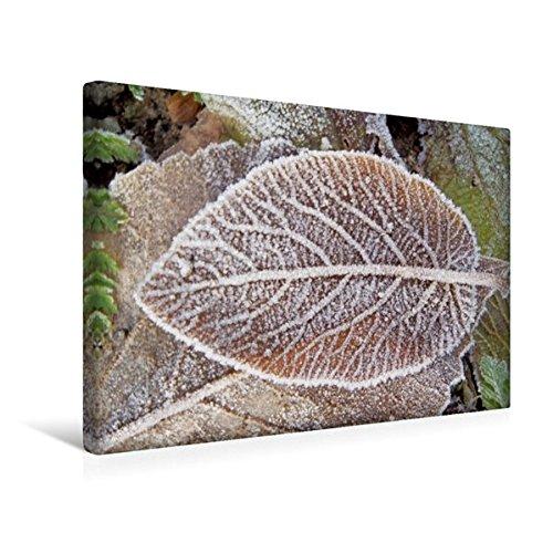 premium-textil-leinwand-45-cm-x-30-cm-quer-buchenblatt-im-reif-wandbild-bild-auf-keilrahmen-fertigbi
