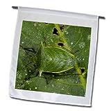 Danita Delimont - Insects - Shield Bug insect, Napo River, Yasuni NP, Ecuador - SA07 POX2057 - Pete Oxford - 18 x 27 inch Garden Flag (fl_86407_2)