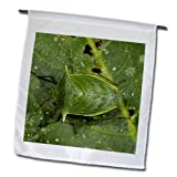 fl_86407_1 Danita Delimont - Insects - Shield Bug insect, Napo River, Yasuni NP, Ecuador - SA07 POX2057 - Pete Oxford - Flags - 12 x 18 inch Garden Flag