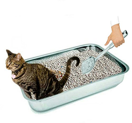 green cat litter options