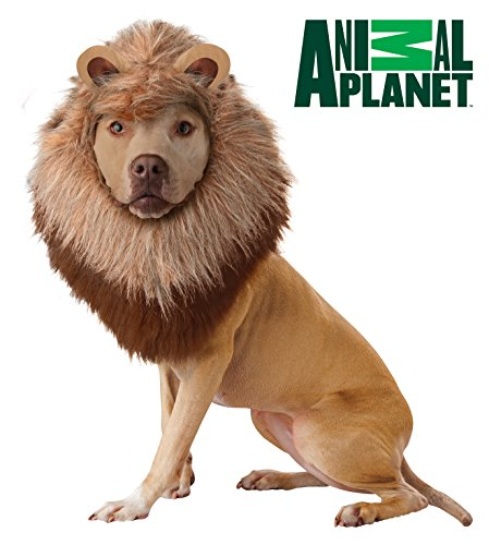 California Costume Collections Animal Planet Lion Dog Costume, Medium