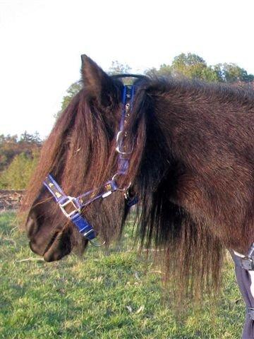 Nylon Halfter mit Pferdemuster Gr. Pony Farbe: